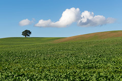 The Tree on a Hill (jactoll) Tags: snitterfield warwickshire lonetree tree light landscape sony a7ii zeiss 70200mmf4 jactoll