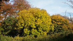 Autumn Colours (zoeboulton) Tags: trees colour color nature foliage golden autumn fall sunlight warwickshire england
