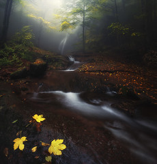 misty river (Krasi St Matarov) Tags: river water autumn landscape waterfall tree bulgaria outdoor nikon adventure fog forest gold ngc leaves longexposure nature