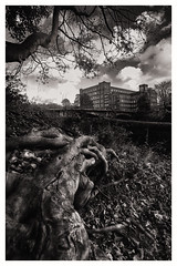 CUR_1125x (ALEXMOFFAT1) Tags: toots trees bridges bw slow shitter low iso d3