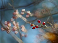 Autumn is playing (wiebke-e) Tags: herbst autumn bokeh pentacon olympus farbe colors