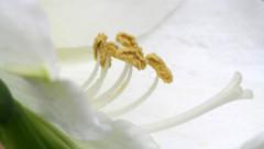 51-197-zweite%2520Serie%2520083-002 (hemingwayfoto) Tags: amaryllis blã¼te blã¼tenblatt blã¼tenstaub blã¼tenstempel blume blumen blumenhandel blumenzucht bunt flora gã¤rtner macroaufnahme natur pflanze rot topfblume topfpflanze zucht zwiebelblume zwiebelpflanze