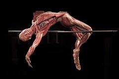 Krperwelten - Body Worlds (thomas druyen) Tags: krperwelten bodyworlds leiche toter gesicht krper portrt berlin gunthervonhagens ausstellung kunst sport plastination exponat alexanderplatz museum nikon mann body gefse