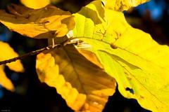 Hidden beetle (Sébastien Locatelli) Tags: sébastienlocatelli 2016 canon eos 80d chartreuse massif savoie france kandscape autumn herbst automne forest forêt wood bois ef 1740mm l usm