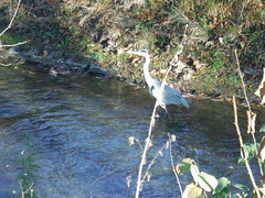 Reiher im Fluss / Heron in river (david_m.hn) Tags: reiher heron