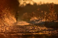 The stranger (Pics4life.nl) Tags: frost sunset stranger meet december light bokeh sparks road forest nature gold warm dof nikond750 sigma