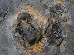Pavement Wounds (geowelch) Tags: toronto urbandecay urbanfragments abstract asphalt closeup panasoniclx5