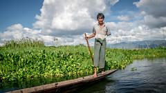 Water traffic (Channed) Tags: asia azi birma burma inlaylake inlelake myanmar shan myanmarbirma water man boat channedimages chantalnederstigt
