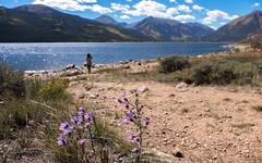 Twin Lakes, CO (pmenge) Tags: co agua pedras flores twinlakes 18135 xt1