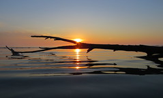 IMG_0082x (gzammarchi) Tags: italia paesaggio natura mare ravenna lidodidante alba sole ramo riflesso