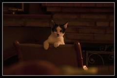 Gato (Jose Losada Foto) Tags: andaluca animales casa casas espaa fotografia gatos higueradelasierra huelva joselosada lugares nikon nikond90 cat