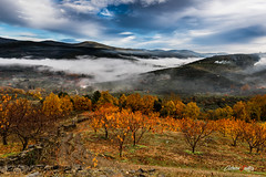 Otoño y niebla (adrivallekas) Tags: canon canoneos5d canoneos5dmarkiv granangular wideangle otoño autumn fall colores colours contrastes contrast nature landscape paisaje naturaleza arboles niebla fog foggy skies sky clouds nubes cielo campo montañas mountains cold orange naranja lashurdes hurdes cáceres extremadura españa spain pueblosdeespaña pueblo town life dof hojas leaf monte canonef1635mm