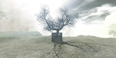 Tree PIano (oblee) Tags: chapter four chapterfour secondlife