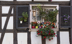A view with a window - HWW! (lunaryuna) Tags: france lalsace strasbourg house building architecture timberframe window crammed flowers plants historicarchitecture windowswednesday hww lunaryuna urban walkinthecity