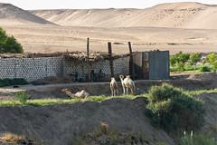 Le long de la rive du Nil (ludovic_tardy) Tags: voyage river sony nil egypte fleuve nex