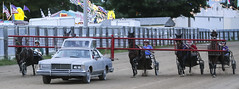 IMG_9266 (milespostema) Tags: county celebrity race big fair rapids harness mecosta