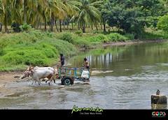 VILLAGE LIFE, MYSORE (GOPAN G. NAIR [ GOPS Creativ ]) Tags: tourism rural photography tour village greenery karnataka mysore nair gops gopan gopsorg gopangnair gopsphotography