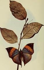 Anglų lietuvių žodynas. Žodis stone mimicry plant reiškia akmens mimikrija augalų lietuviškai.