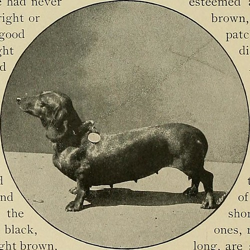 """Image from page 47 of """"Our domestic animals, their habits, intelligence and usefulness;"""" (1907)"""