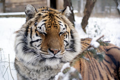 2014-01-29 Snow Aria (158)