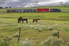 Soaked Horses (MRL 390) Tags: railroad horses wet rain montana branch freight damp mrl soaked freighttrain branchline gp35 montanaraillink sappington emdgp35 mrl403 harrisonbranch harrisonmontana sappingtonmontana mrlharrisonlocal mrlharrisonbranch mrlgp35 railroadbranch mrlgp35403