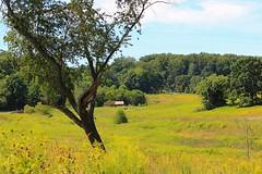 The Meadow at Longwood (PHOTOPHANATIC1) Tags: longwood themeadow