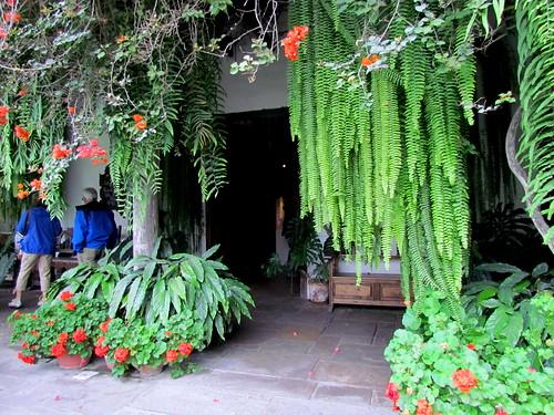 84 Flowers Larco Museum Restaurant Lima Peru 1783