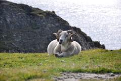 Fair Isle, Shetland (Mary af Rövarhamn) Tags: fairisle shetland