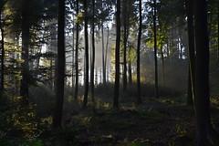 _DSC2968 Märchenhafte Morgenstimmung im Wald - Fairytale morning mood in the forest (baerli08ww) Tags: mist fog forest germany deutschland day nebel tag wald rheinlandpfalz westerwald rhinelandpalatinate westerforest
