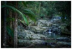 Rainforest oasis (pbaddz) Tags: australia goldcoast goldcoasthinterland springbrooknationalpark currumbincreek rainforeststream worldheritageplace