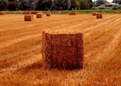 Straw Bales (saxonfenken) Tags: field rural square dof harvest haybales strawbales gamewinner 6957 challengewinner pregamewinner 6957land