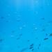 fish             IMG_0562s