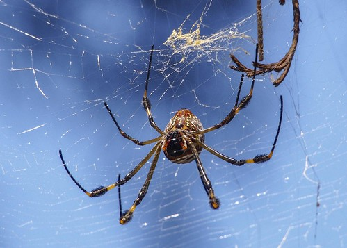 Spider B249970focPr