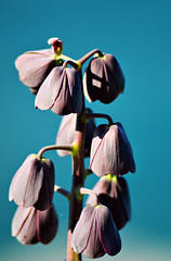 Flower 31 (Makro1) Tags: flowers flower macro nature switzerland nikon europe suisse swiss eurotrip makro tamron priroda montreux naturephotography macrophotography evropa travelphotography cvet svajcarska cvece cvetic d7000 tamronaf70300mmf456dild12macro nikond7000