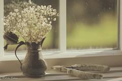 window sill (melike erkan) Tags: stilllife flower flowers vase antique vintage window light windowlight dof reflection old retro wow
