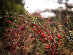 2016-09-30_19-11-29 (torstenbehrens) Tags: fruit nature bokeh olympus penf m45mm f18 digital camera