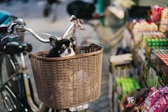 front seat (ken_tsuda) Tags: komagome dog bicycle basket front seat nikon d810 50mm f14 kentsuda tokyo street pet 201601002mkomagome4588