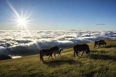 Goizean goiz Gorbeian (Jabi Artaraz) Tags: jabiartaraz jartaraz zb euskoflickr behorrak gorbeia bruma lainoa nubes sol eguzkia sun contraluz pradera airelibre
