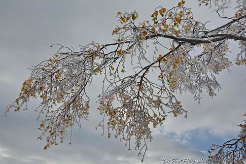 Image d'automne en Savoie.