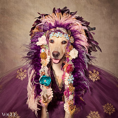 Catori (tswarek) Tags: shelterpetsproject rescue dogs dog adoptable fashion couture high caps regal beautiful floral flowers feathers fonzie catori tammy swarek tammyswarek photography portrait art fine fineart bowtie denim style stylish ontrend trendy glamour shelter