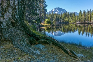 #Z087 Tree Root and Mirror Lake (1 of 1)