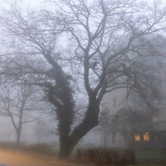 November Morning (farmspeedracer) Tags: autumn fall fog mist darkness tree scary ghost spooky nature park explore