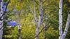 Autumn 2016, Jackson Hole Wyoming, Grand Tetons National Park (Hawg Wild Photography) Tags: autumn2016 jacksonholewyoming grandtetonsnationalpark landscape nature terrygreen nikon nikon200400vr d810 hawg wild photography