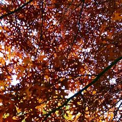 Definitely #autumn (josephgrima) Tags: cold tonal sunrise sun orange red fall trees colours season autumn