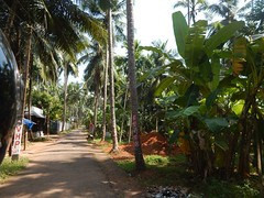 Villages Near Calicut Kerala Photography By CHINMAYA M (26)