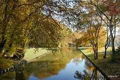 ... (Q-BEE) Tags: freizeit indiansummer herbst nature stadtwald autumn leaves goldenoctober sun trees
