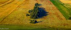 Canevas de couleurs (Marmad31) Tags: color ombres campagne bosnie champs