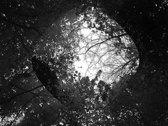 In the trees 2 (Gobalob) Tags: up tree abstract warped distorted forest trees branches sky leaf leaves art day clouds