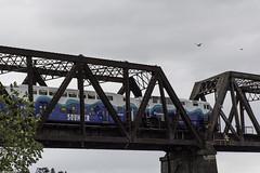 Seahawks Sounder special (wacamerabuff) Tags: sounder bnsf rail train ballard washington