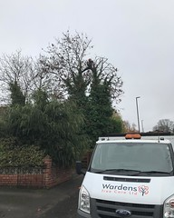 """One of today's ash reductions shaping up nicely! @chalktree climbing today #wardenstreecare <a style=""""margin-left:10px; font-size:0.8em;"""" href=""""http://www.flickr.com/photos/137723818@N08/30805760230/"""" target=""""_blank"""">@flickr</a>"""